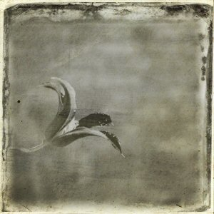 iPhoneography - Iris - old photo