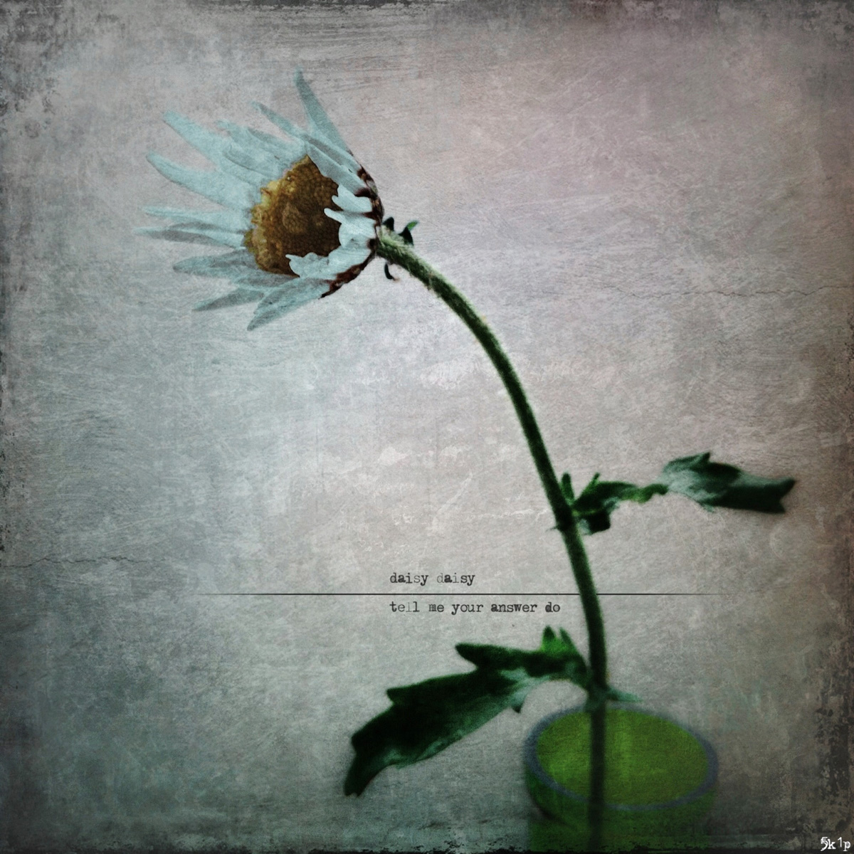 iPhoneography - daisy